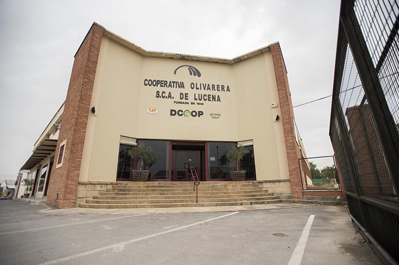 cooperativa-olivarera-de-lucena-1