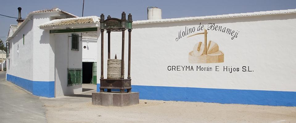 greyma-1